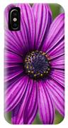 Lovely African Daisy - Osteospermum IPhone Case