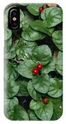 Madder Geophila Repens Fruiting IPhone Case