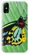Male Cairns-birdwing Butterfly IPhone Case