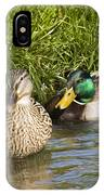 Mallards Nesting IPhone Case