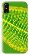 Marine Diatom Podocystis Spathulata IPhone Case