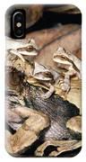 Marsupial Frog Gastrotheca Ovifera IPhone Case