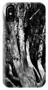 Melaleuca Tree IPhone Case