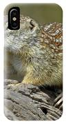 Mexican Ground Squirrel IPhone Case