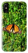 Monarch Butterfly Photograph IPhone Case