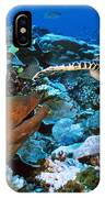 Moray Eel On A Reef IPhone Case