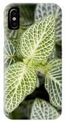 Mosaic Plant (fittonia Albivenis) Leaves IPhone Case