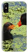 Mother Common Gallinule Feeding Baby Chick IPhone Case