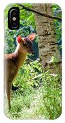 Muntjac Deer - Muntiacus Reevesi IPhone Case