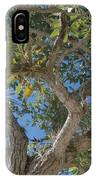 Naples Tree IPhone Case