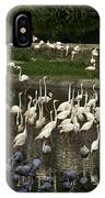 Number Of Flamingoes Inside The Jurong Bird Park In Singapore IPhone Case