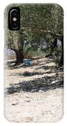 Olive Trees In Sebastia Nablus IPhone Case