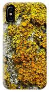Orange Lichen - Xanthoria Parietina IPhone Case