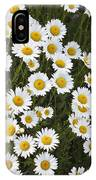 Ox-eyed Daisies, Banff National Park IPhone Case