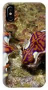 Pair Of Miamira Magnifica Nudibranch IPhone Case