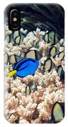 Palette Surgeonfish Over Coral IPhone Case