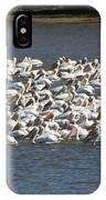 Pelican's Feeding IPhone Case