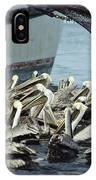 Pelicans Float In Water Near A Shrimp IPhone Case