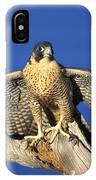 Peregrine Falcon On Perch IPhone Case
