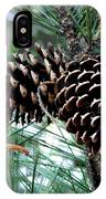 Pine Cone 2 IPhone Case