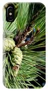 Pine Cones In A Pine Tree IPhone Case