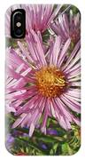 Pink New York Aster- Symphyotrichum Novi-belgii IPhone Case