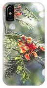 Poinciana Blossoms Close-up V2 IPhone Case