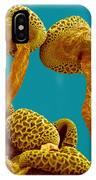 Pollen Tubes Of Lily Pollen, Sem IPhone Case