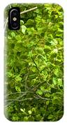 Poplar Tree And Leaves No.368 IPhone Case