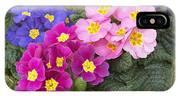 Primrose Primula Sp Flowers IPhone Case