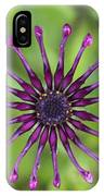 Purple Flower In Bloom IPhone Case