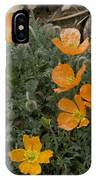 Pyrenean Poppy (papaver Lapeyrousianum) IPhone Case