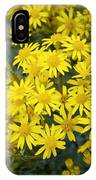 Ragwort (senecio Jacobaea) IPhone Case