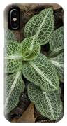Rattlesnake Plantain A Study In Leaves IPhone Case