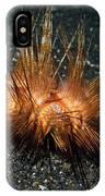 Red Sea Urchin (astropyga Radiata) IPhone Case