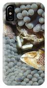 Red-spotted Porcelain Crab Hiding IPhone Case
