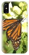 Monarch Butterfly Feeding On A Cluster Of Yellow Flowers IPhone Case