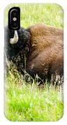 Resting Buffalo IPhone Case