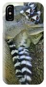 Ring-tailed Lemurs Madagascar IPhone Case