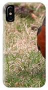 Robin Redbreast IPhone Case