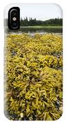 Rock Weed Fucus Gardneri At Low Tide IPhone Case