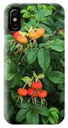 Rugosa Rose With Rose Hips IPhone Case