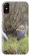 Sandhill Cranes In Colorful Marsh IPhone Case