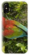 Scarlet Macaw Ara Macao Adult Perching IPhone Case