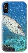 Scribbled Filefish IPhone Case