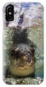 Sea Lion Portrait, Los Islotes, La Paz IPhone Case