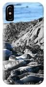 Sea Lions In Alaska IPhone Case