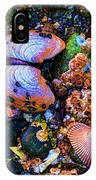 Sea Shells Sea Life IPhone Case