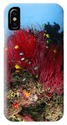 Sea Whips And Soft Coral, Fiji IPhone Case