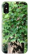 Shadows Of The Sweet Gum IPhone Case